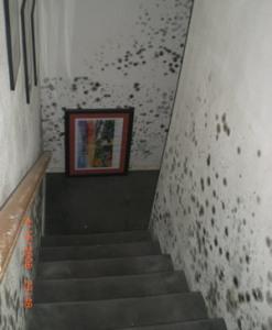 Black mold in stairway