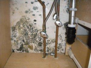 Black mold under sink