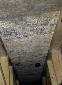 Mold above crawl space in Sheridan
